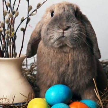 Easter_Bunny4