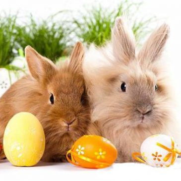 Easter_Bunny6