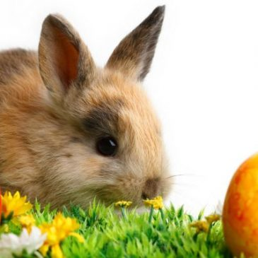 Easter_Bunny8