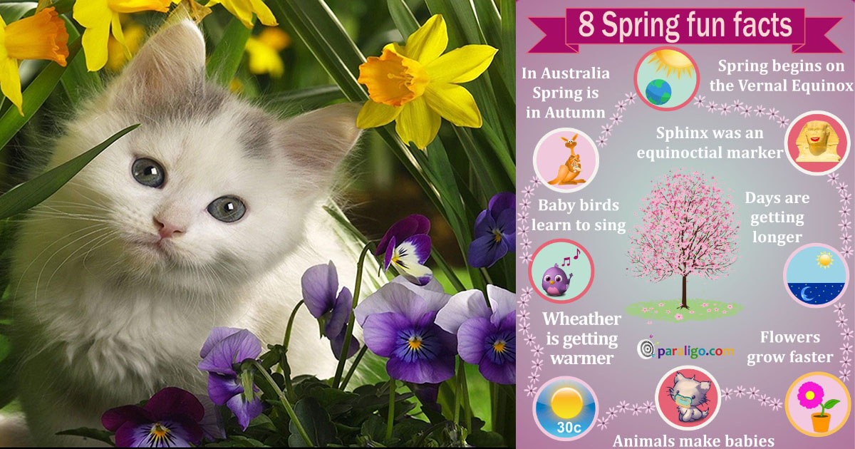 Spring Flowers Interesting Facts Flowers Healthy
